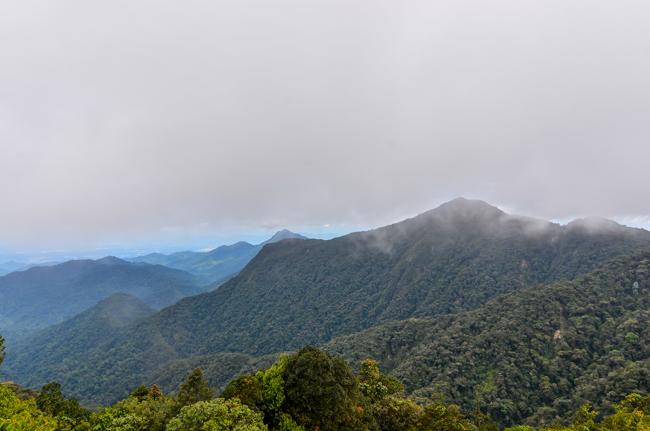Gunung Brinchang-Cameron Highlands_-7